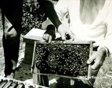 Benitses - Bienenzucht -1960