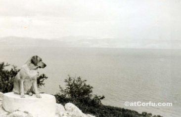 Benitses - Hund in den Hügeln von San Stefano