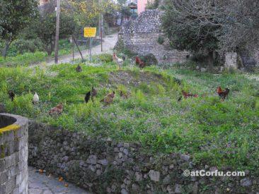 Μπενίτσες - δίπλα στα Ρωμαϊλά λουτρά