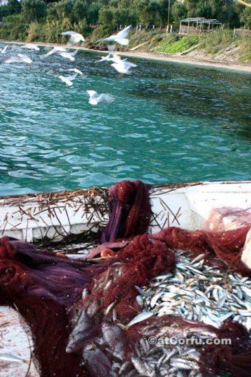 Μπενίτσες - ψαράδες