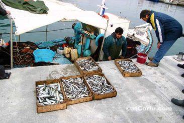 Μπενίτσες, φρέσκια ψάρια