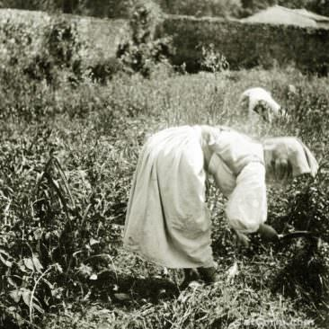 Corfu old photos-working woman in the countryside  1930