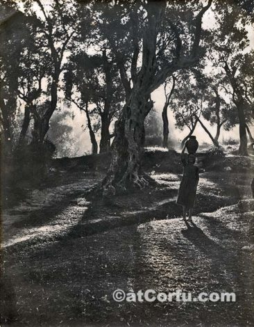 Benitses - at Manesis olive trees 1923
