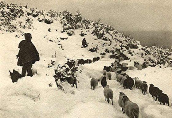 sheeps at Olympus